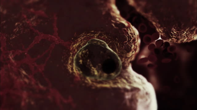 extreme close up hand-held - a brain-eating amoeba burrows into a brain and replicates in a computer-generated animation. - symbiotic relationship stock videos & royalty-free footage