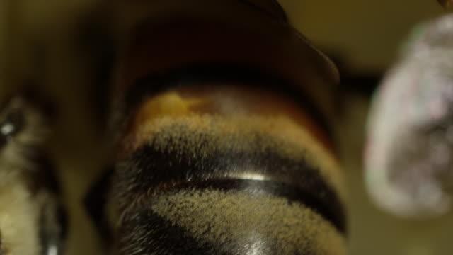 Extreme Close - Up Honeybees