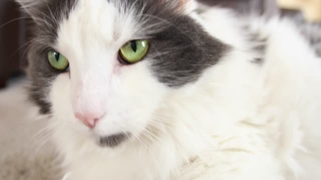 Extreme Close Up Kitty