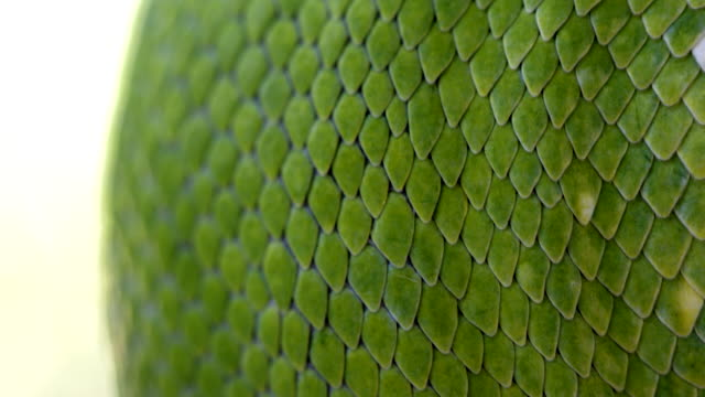 extreme close up of green snake scales - scaly stock videos & royalty-free footage