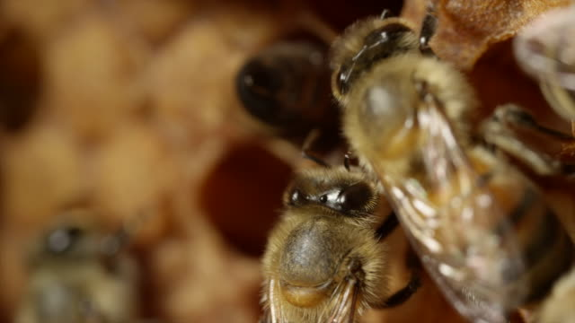 extreme close up of honeybees - animal wing stock videos & royalty-free footage