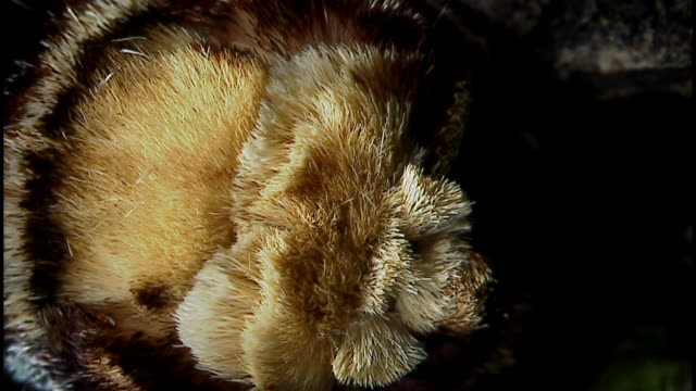 extreme close up of the face of a buff tail moth - magnification stock videos and b-roll footage
