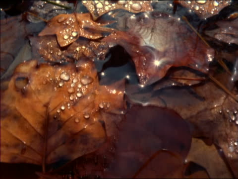 extreme close up point of view over brown + orange leaves in water / autumn / great smoky mountains, north carolina - cinematografi bildbanksvideor och videomaterial från bakom kulisserna