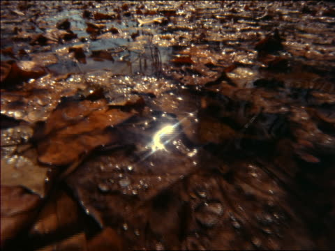 extreme close up point of view over brown + orange leaves in water / autumn / great smoky mountains, north carolina - cinematography stock videos & royalty-free footage