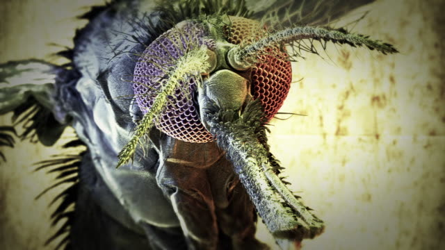 extreme close up push-in - a proboscis protrudes from a mosquito's face in a computer-generated animation. - mosquito stock videos and b-roll footage