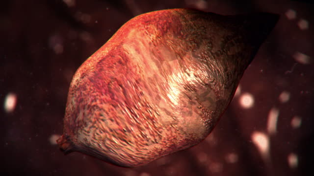 vídeos y material grabado en eventos de stock de extreme close up push-in push-out - a lung fluke worm expands inside a lung in a computer-generated animation. - platelminto