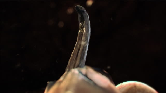 extreme close up push-in push-out - parasitic roundworms hatch inside a blood vessel and travel through the circulatory system. - micrografia video stock e b–roll