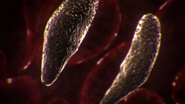 vídeos y material grabado en eventos de stock de extreme close up push-in tracking-right - lung fluke worms reproduce inside a freshwater snail in a computer-generated animation. - platelminto