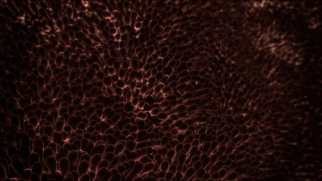 extreme close up push-out tilt-down - lung fluke eggs attach to biological tissue in a computer-generated animation. - worm stock videos and b-roll footage