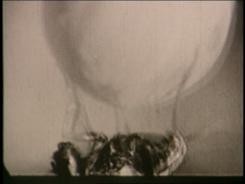 b/w 1930 extreme close up small insect lying on its back spinning ball / documentary - viraggio video stock e b–roll