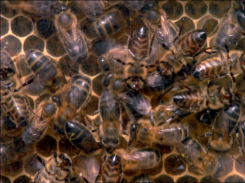 vídeos de stock e filmes b-roll de extreme close up swarm of bees on beehive / southern france - 1997