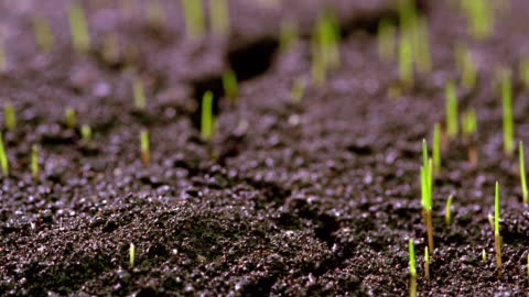 vídeos y material grabado en eventos de stock de extreme close up time lapse grass sprouting from soil - hierba familia de la hierba