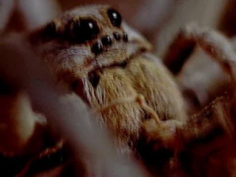 extreme close up - クモ類点の映像素材/bロール
