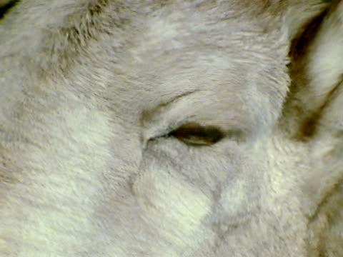 vidéos et rushes de extreme close up - extreme close up