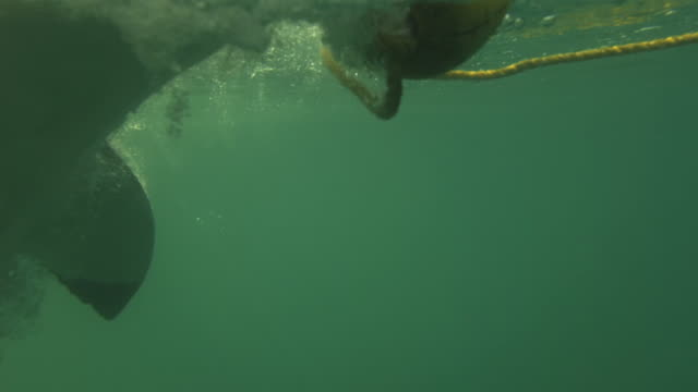 Extreme close-up of a Great Whites Eyes Rolling back