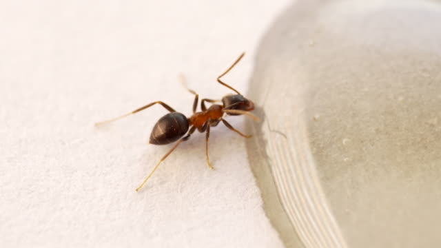 extreme close-up of an ant - horizontal stock videos & royalty-free footage