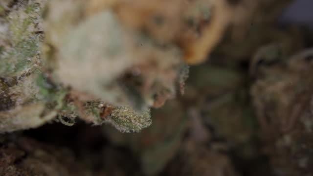 extreme close-up of marijuana bud - legalisation stock videos & royalty-free footage