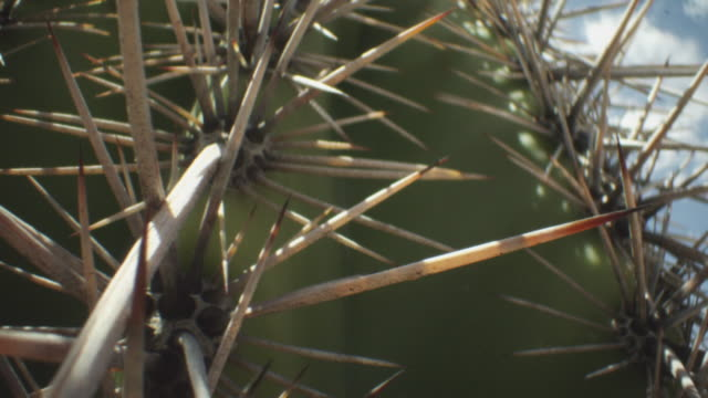 Extreme close-up of spines of barrel cactus