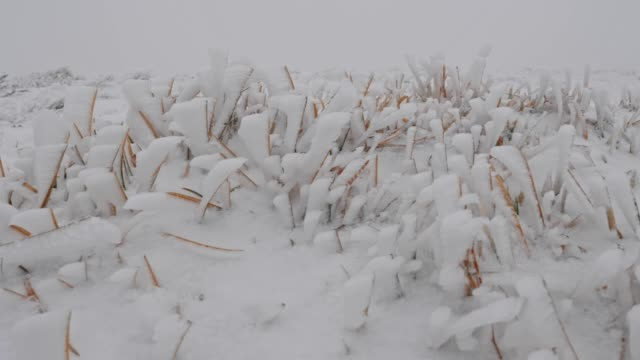 extreme close-up shot of snow-covered grass, frozen, frost all over, white coloured - frozen stock videos and b-roll footage