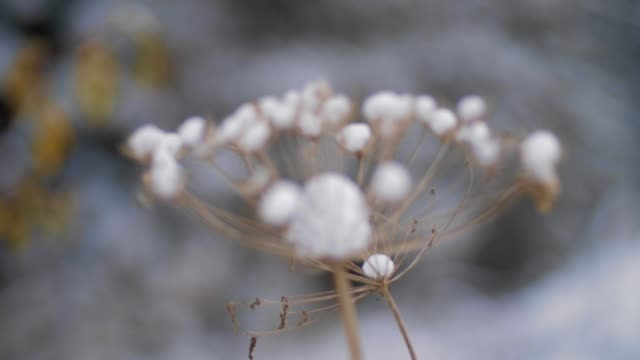 extreme close-up shot of snow-covered plants, frozen, frost all over, white coloured - frost stock videos & royalty-free footage
