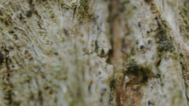 Extreme close-up, Tree trunk