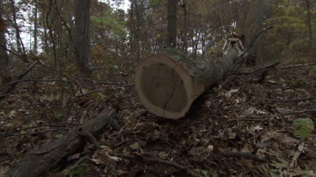 Extreme Long Shot hand-held - A log slides behind a skidder in a forest. / Missouri, USA