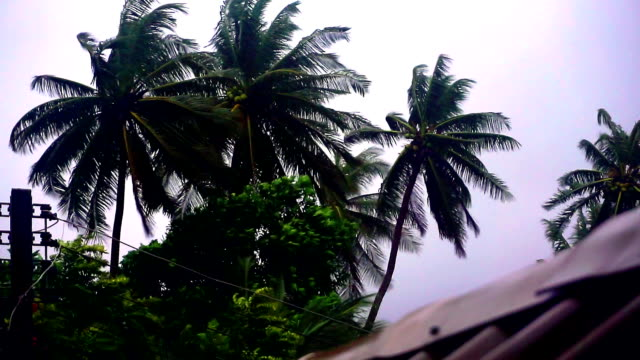 Extreme Weather : Typhoon Storm Bending Coconut Trees