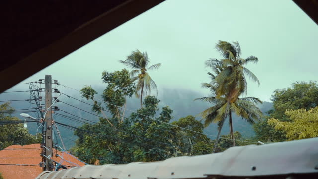 Extreme weather Typhoon storm bending Coconut trees