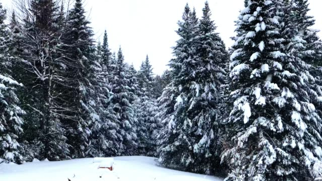 Extreme Winter in Vermont