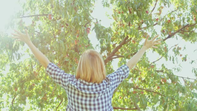exuberant woman looking up at sunny peach tree,slow motion - gingham stock videos & royalty-free footage