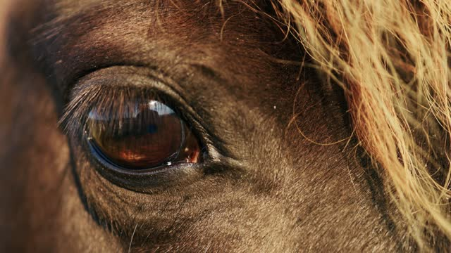 eye close view: brown horse looking at you dolly in - human eye stock videos & royalty-free footage