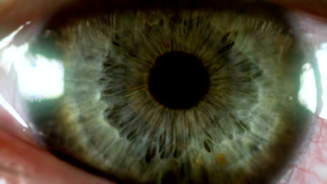 eye macro - eyeball stock videos and b-roll footage