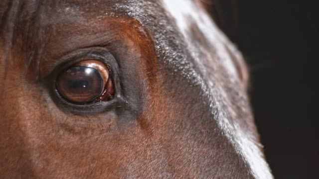 Eye of a horse blinking
