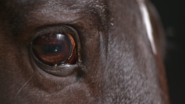 slo mo eye of a horse - animal eye stock videos and b-roll footage