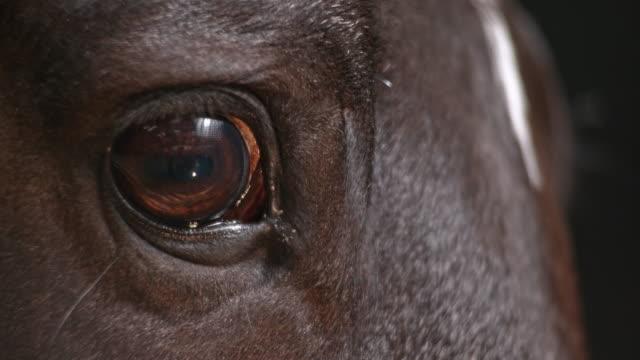 vidéos et rushes de slo mo oeil d'un cheval - oeil d'animal