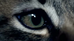 Eye of a kitten. Extreme close up
