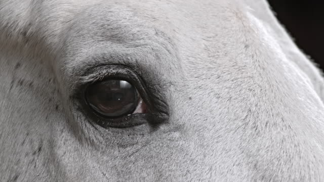 vidéos et rushes de oeil d'un cheval blanc - oeil d'animal