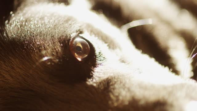 eye of black dog - dog blinking stock videos & royalty-free footage
