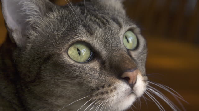 eye of brown striped cats - cat blinking stock videos & royalty-free footage