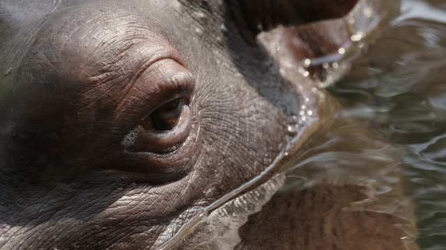 ECU Eye of Hippopotamus / Hoedspruit, South Africa