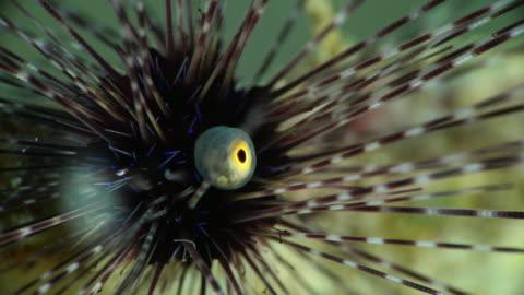 eye of sea urchin under water in philippines - ウニ点の映像素材/bロール