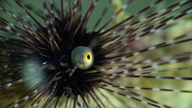 eye of sea urchin under water in philippines - ricci di mare video stock e b–roll