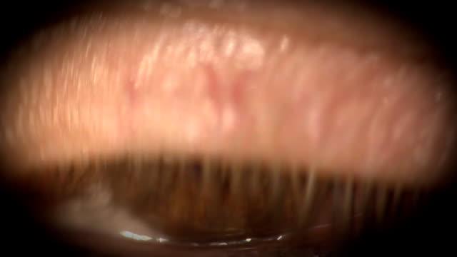 vídeos de stock, filmes e b-roll de os olhos - olhos castanhos