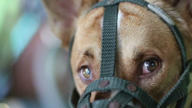 eyes dog with a muzzle mouth. - raised eyebrows stock videos & royalty-free footage