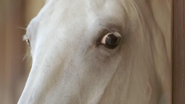 LD ogen van een wit paard