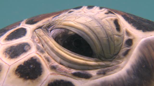 cu eyes of turtle / mabul, sabah, malaysia   - turtle stock videos & royalty-free footage
