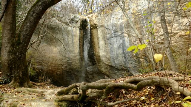 fabelhafte landschaft mit wasserfall im herbstwald - baumgruppe stock-videos und b-roll-filmmaterial