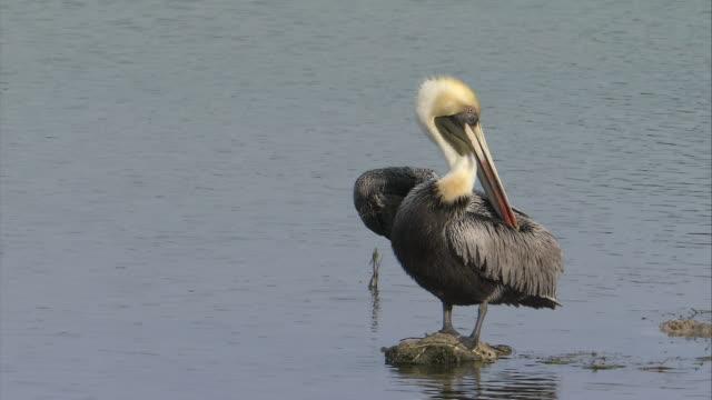 CU  Face of pedetaory bird  / Florida Keys, Florida, USA
