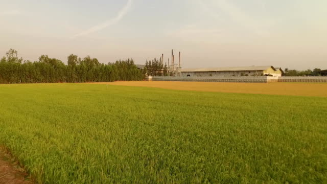 Factory in the middle of a green farmland on sunset