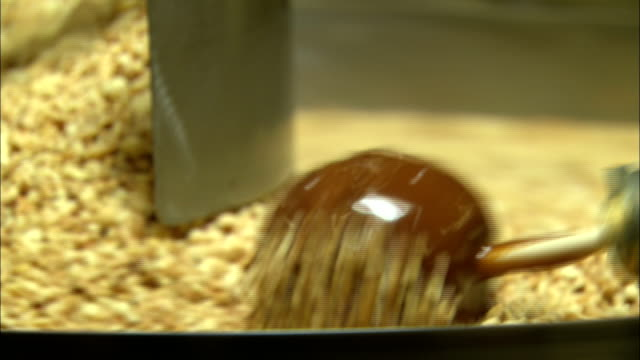 a factory machine rolls caramel apples in chopped peanuts. - toffee stock videos & royalty-free footage